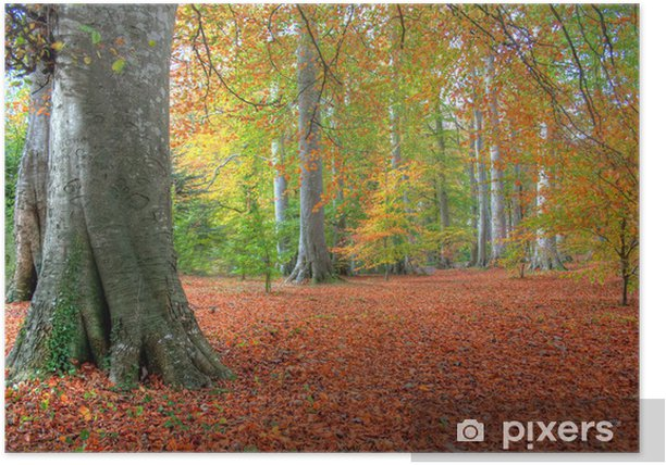 Autumn Leaves in Powerscourt Poster - Forests