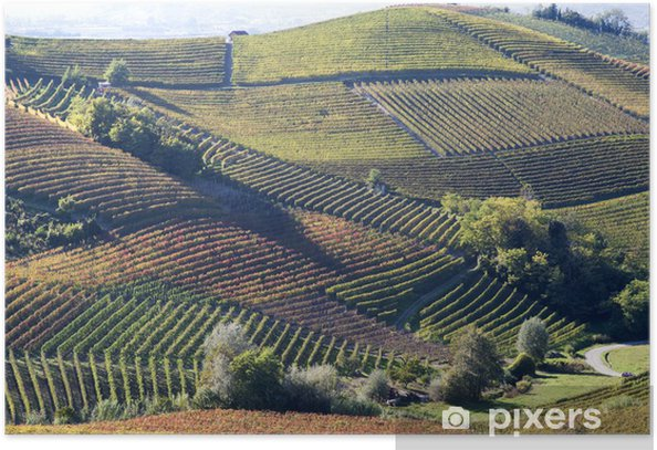 Autumnal landscape of vines and hills in Langhe, Italy Poster - Agriculture