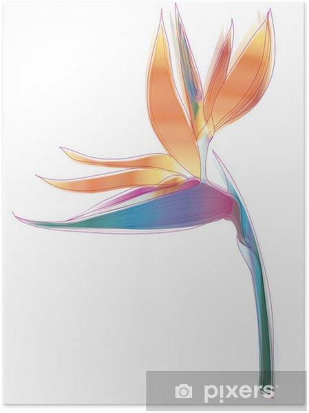Póster Ave del paraíso de las flores (Strelitzia reginae) - Flores