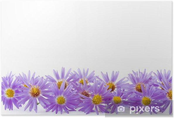 Póster Azul crisantemo - Eventos nacionales
