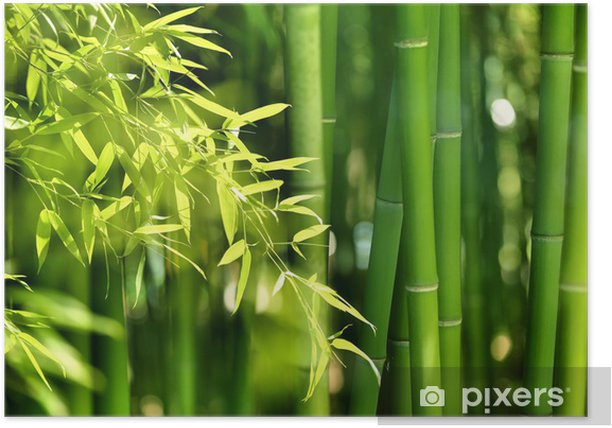 Bamboo forest Poster - Themes