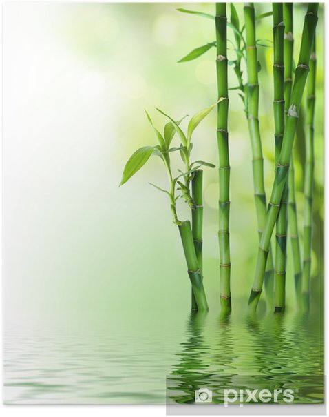 bamboo stalks on water Poster - Styles