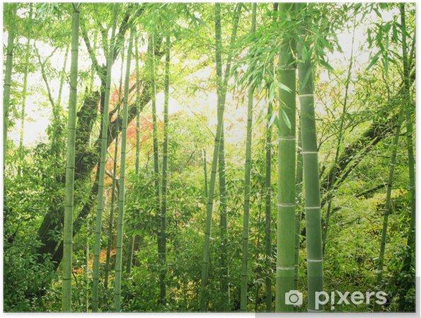 Póster Bamboo - Temas