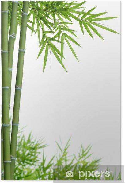 Poster Bambou avec des feuilles - Thèmes
