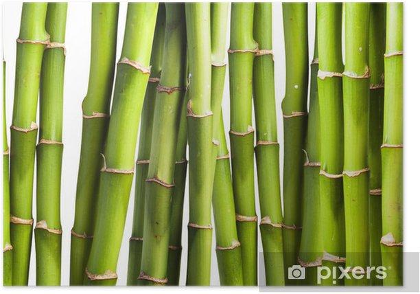 Poster Bambou fraîches - Thèmes