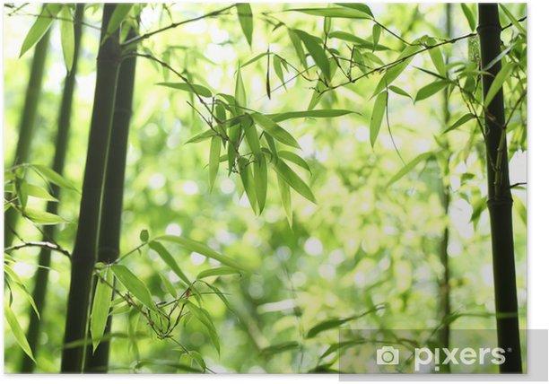Poster Bambou - Bambous