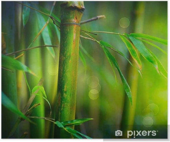 Póster Bambú - Estilos