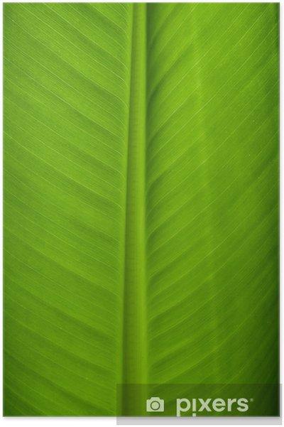 Poster Banana Leaf Gros plan - Plantes