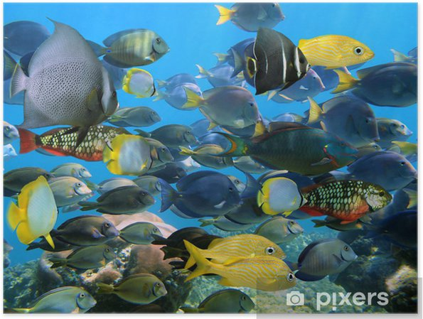 Poster Banc de poissons - iStaging