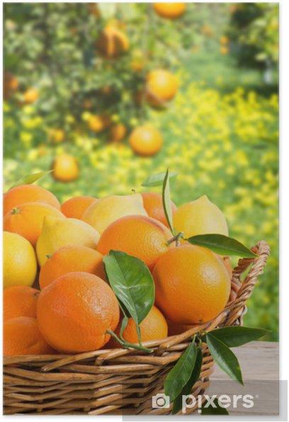 Basket full of oranges and lemons in garden Poster - Fruit
