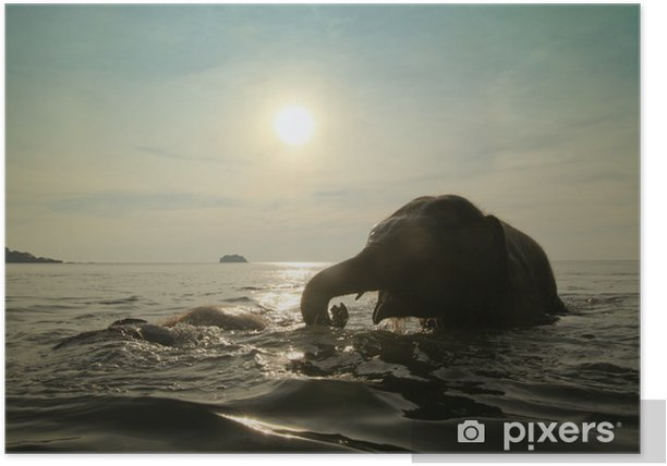 Bathing elephants in the sea Poster - Mammals