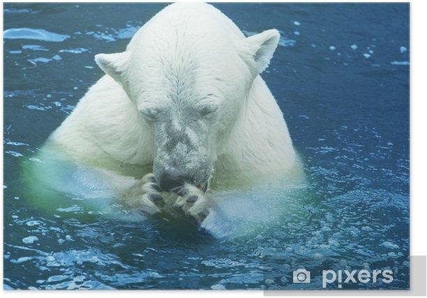 Bear Poster - Themes