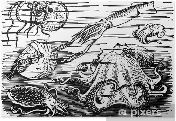 Poster Beaucoup de différents animaux de la mer sous-marine - Animaux marins