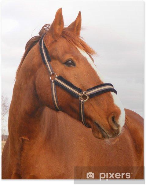 Beautiful latvian breed chestnut horse Poster - Liberty
