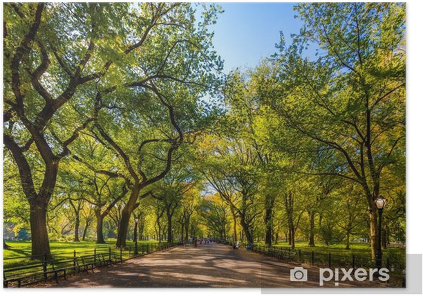 Beautiful park in beautiful city..Central Park. The Mall area in Central Park at autumn., New York City, USA Poster - Landscapes