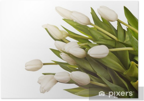 beautiful tulips Poster - Flowers