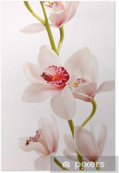 Poster Beautuiful orchidée - Thèmes