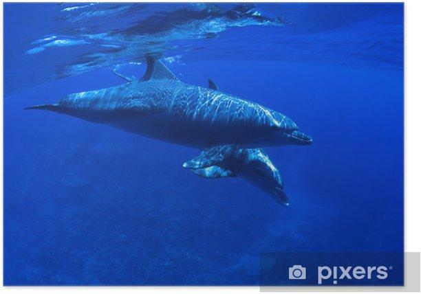 Poster Bébé dauphin piscine avec sa mère. - Thèmes