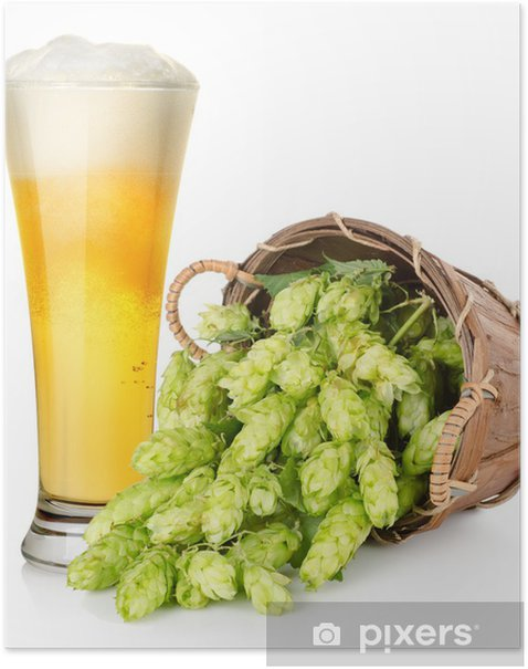 Beer and hop in basket Poster - Alcohol