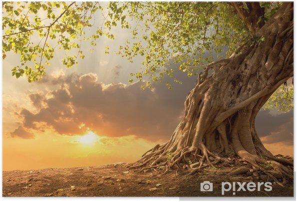 Poster Bel arbre au coucher du soleil orange vif avec espace copie gratuit. - Paysages