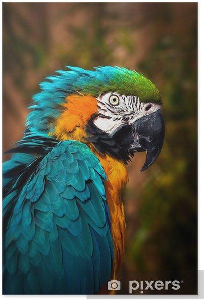 Poster Belle bleu et or ara - Portrait Parrot - Thèmes