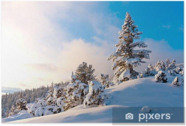 Poster Belle pin dans la forêt d'hiver - Forêt