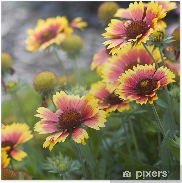 Poster Belles fleurs de jardin d\'automne • Pixers® - Nous vivons ...