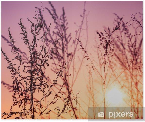 Poster Belles plantes. nature, ressort - Sports d'extérieur