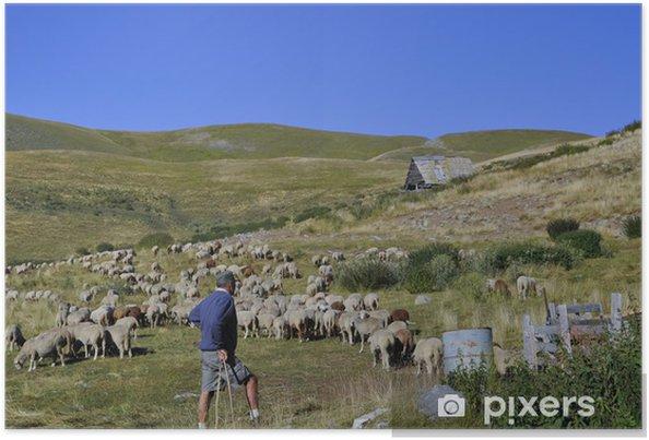 Poster Berger qui surveille sont troupeau - Mammifères