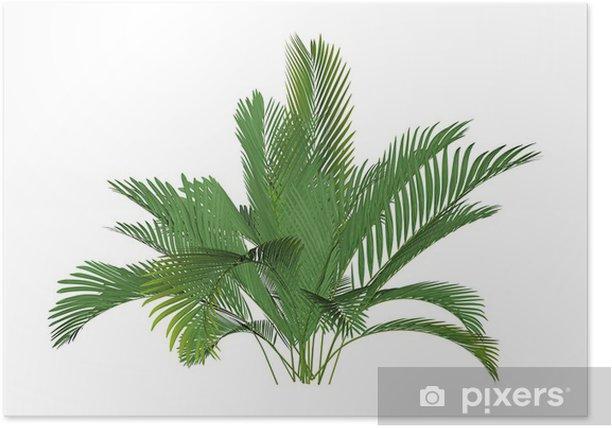 Poster Bergpalme - Plantes