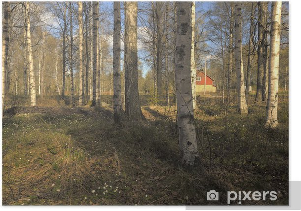 Go Anywhere Bag Birch Forest