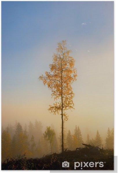 Birch tree in autumn Poster - Seasons