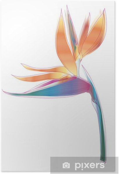 Bird of paradise flower (Strelitzia reginae) Poster - Flowers