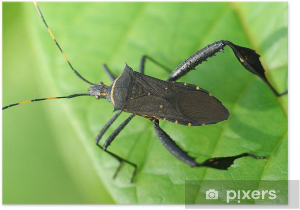 black insect anf leaf Poster - Other Other