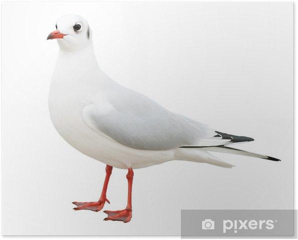Poster Blanc mouette oiseau isolé - Oiseaux
