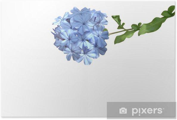 Poster Blaue blume - Tristesse