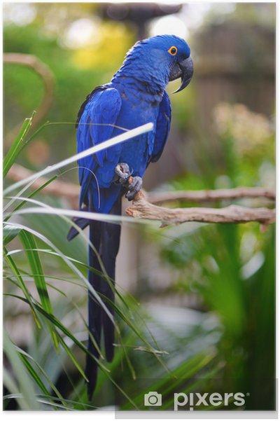 Fonkelnieuw Poster Blauwe ara papegaai op een tak • Pixers® - We leven om te SM-62