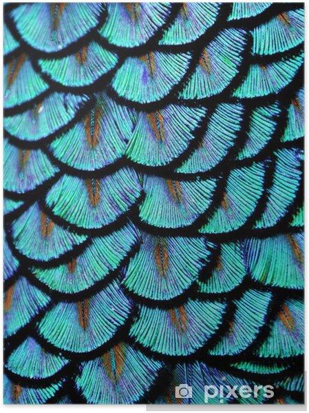 Poster Blauwe veren - Dieren
