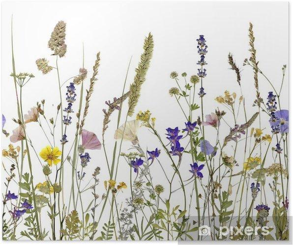 Poster Bloemen en kruiden. Een illustratie kan naadloos aansluiten horizontaal - Bloemen en Planten