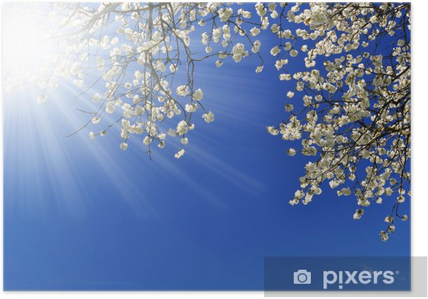 Blooming cherry tree Poster - Seasons