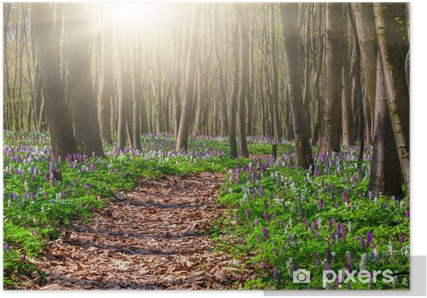 Blooming fields of flowers in spring forest Poster - Forests