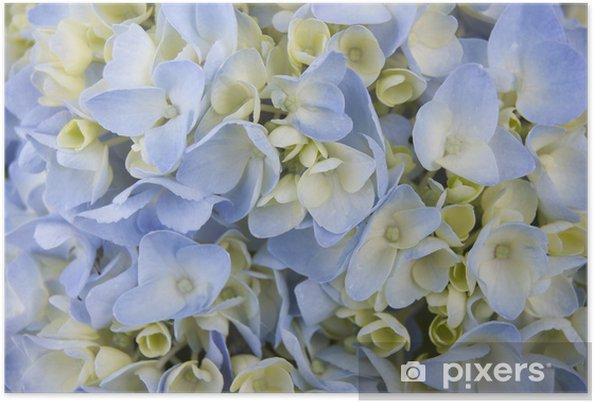 Póster Blooming instantánea de fondo hortensias - Plantas