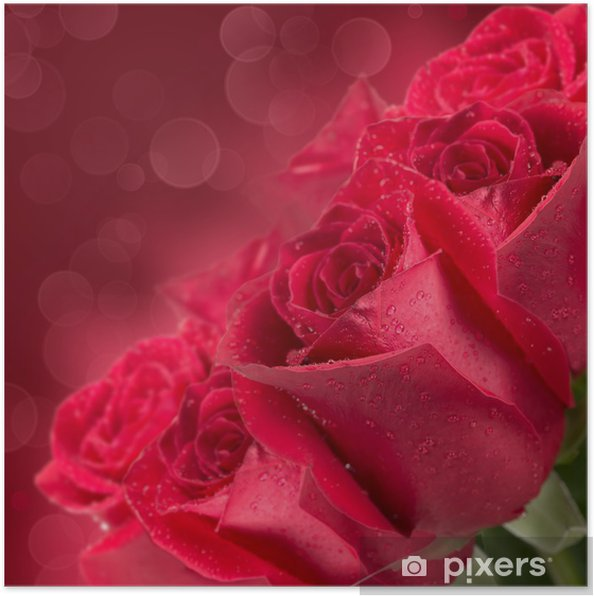 Poster Blooming roses rouges - Fleurs