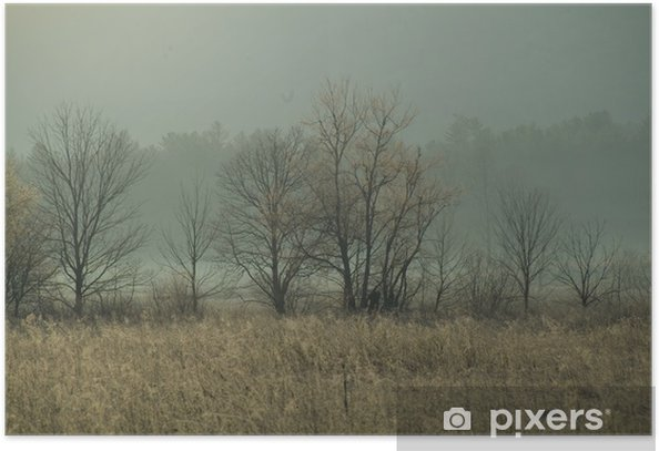 blossoming spring tree and sunrise morning fog Poster - Countryside