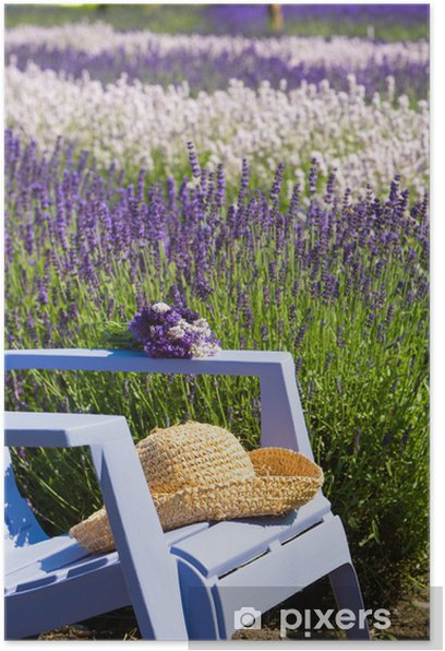 Blue chair in a purple field of lavender Poster - Themes