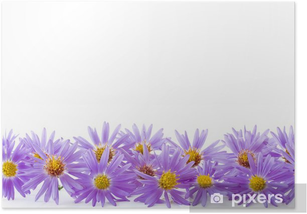 blue chrysanthemum Poster - National Events