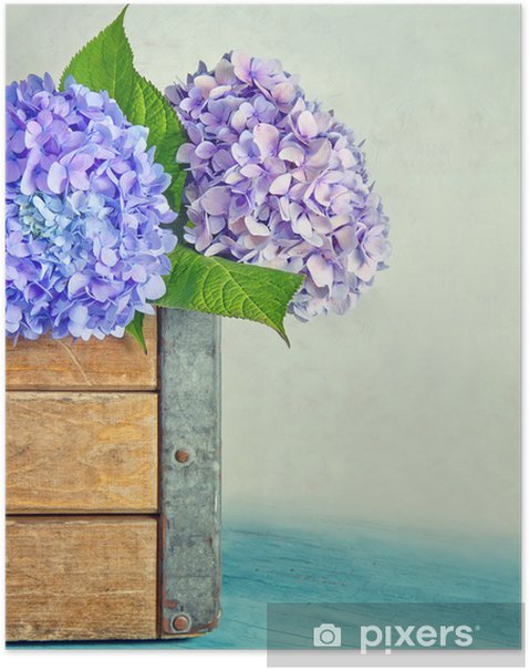 Blue hydrangea flowers in a wooden box Poster - Flowers