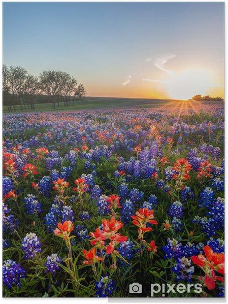 Poster Bluebonnet et de fleurs sauvages d'Indian Paintbrush déposées, Texas - Thèmes
