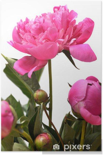 Poster Blume - Fleurs