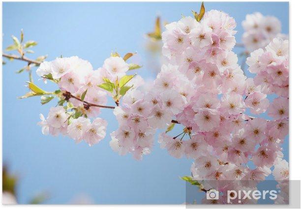 Blüten Poster - Asia